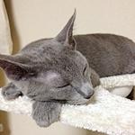 猫ちゃんは本当によく眠る