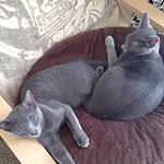 猫はオイルヒーターで丸くなる?