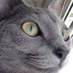 【猫の目の病気】右目のまぶたが腫れて目やにが出るので動物病院へ行って来ました♪ 点眼用エリコリT点眼薬