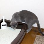 新しく猫トイレ買いました