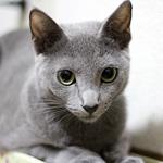 猫のボディランゲージ じっと見つめる編