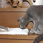 気になる猫ちゃんの毛の効果的な掃除の仕方
