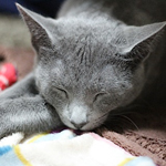 猫の睡眠時間とよく眠る理由