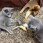 猫の世界も年功序列!?