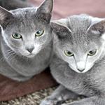 【猫の避妊・去勢手術】避妊手術後80日経過しました