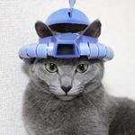 【機動戦士ガンダム】ザクとは違うのだよ、ザクとは!!|【猫の病気】カラー13日目