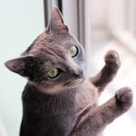 【猫と考える日本の未来】中国依存は嫌だ!!いろいろ挑戦してみよう!!