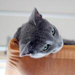 【猫と考える日本の未来】種を征するものは世界を征す