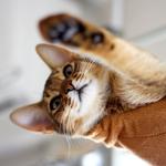 【猫と考える日本の未来】キャットフードとTPP