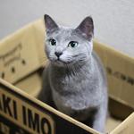 【猫と考える日本の未来】コーヒーとTPP
