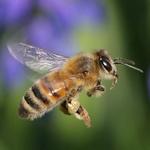 ミツバチとTPP