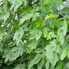 【家庭菜園】緑のカーテン(ゴーヤ)大きくなってきました