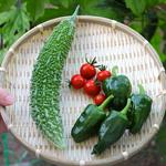 【家庭菜園】今日の収穫(6月29日)ゴーヤ・ミニトマト・ピーマン|コーヒー栽培日記