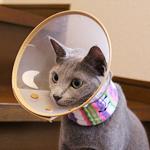 【猫の病気】あおちゃんの皮膚病再発 免疫抑制剤を使うことに決めました|コーヒー栽培日記