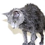 【猫のシャンプー】すっきり