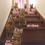ニャンズだよ!!全員集合〜♪|食の安全(2)