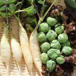【家庭菜園】今日の収穫とブルーベリー|食の安全(3)