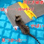 【猫グッズ】破壊された爪とぎ|食の安全(4)