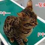 【猫の病気】動物病院へ行ってきました|日本の医療とTPP(10)