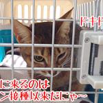 【猫と病気】動物病院とセカンドオピニオン|日本の医療とTPP(11)