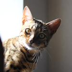 猫だってチャレンジ!!|日本の医療とTPP(25)