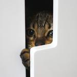 猫の隠れんぼ 日本の医療とTPP(29)