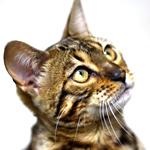 【猫の避妊・去勢手術】まだ回復していないの・・・|日本の医療とTPP(43)