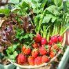 【家庭菜園】今日の収穫と一番花♪|米国ミネソタ州 トリクロサンを含む衛生商品販売を禁止へ|日本の医療とTPP(55)
