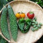 長州あおちゃんのキレてないっすよ!?|【家庭菜園】今日の収穫♪ゴーヤ・ピーマン・ミニトマト・プチキュウ・イチゴを収穫したよ♪