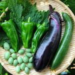 ズコッ〜!!|【家庭菜園】今日の収穫♪茄子・きゅうり・プチきゅう・青じそ・ピーマンを収穫したよ♪