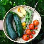 今日は七夕♪星に願いを♪|【家庭菜園】ズッキーニを初めて収穫したよ♪