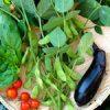 台風が過ぎ去り安心して昼寝をする猫♪|【家庭菜園】ついに枝豆収穫!!