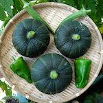 りくたんのあん♥|【家庭菜園】今日の収穫♪坊ちゃんかぼちゃを収穫したよ♪