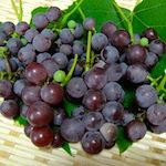 夏休みの工作|【家庭菜園】デラ貴重なデラウェアを収穫したよ♪|食の安全(5)