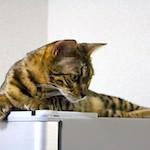 猫と一緒に英語を学ぼう!?|コーヒーゼリー作ったよ♪