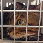 【猫の健康】りくたん動物病院へ行く!!
