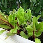 NYK48猫の握手会?|【家庭菜園】秋野菜の種まきをしたよ♪