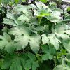 今日の猫ちゃん♪|【家庭菜園】秋野菜発芽してきたよ♪