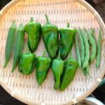 今日のかいちゃん♪|【家庭菜園】シナモンバジルを定植したよ♪|バーガーキングでKURO Pearl&Diamondを食べたよ♪
