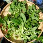 明日はふうちゃんの誕生日♪|【家庭菜園】今日の収穫♪・枝豆を収穫したよ♪