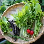 【家庭菜園】今日の収穫♪|【パシャっとmyペット】ベストショットに選ばれたよ♪