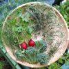 今日はクリスマス♪|【今日の収穫】フェンネルの葉・ラディッシュ・イタリアンパセリ・茎ブロッコリー・タイム・ローズマリーを収穫したよ♪