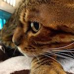 【猫の病気・肥満細胞腫】りくたん動物病院へ行く