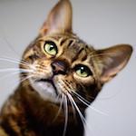 今日のりくたん(投薬14日目)|猫の病気