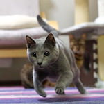 2月22日は「ネコの日」今年も爆走するニャよーー! ≡・∀・≡