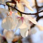 【春分の日 3月21日】太陽が復活する日 自然に生かされている感謝と新たな願いを込めて♪