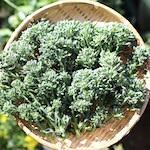 【猫グッズ】猫じゃらし フィッシュワンド・フェザーワンド(交換用パーツ)を購入♪|茎ブロッコリーと水菜を収穫したよ♪