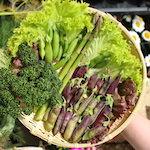 【家庭菜園】3000年の時が蘇る?採れたてツタンカーメンで豆ご飯を作ったよ♪|(゚Д゚)くうちゃんのフレーメン反応(´Д` )