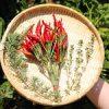 【ベランダ田植え】今日から5月 今年はベランダ田植え&ミニ・ビオトープにチャレンジしてみよう♪|【今日の収穫】ローズマリー&タイムオイルを作ったよ♪