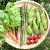 【今日の収穫】そら豆・スイスチャード・アスパラガス(緑・紫)・苺を収穫したよ♪|【カメラ女子】Canon EOS 7D Mark II AF に不具合 ファームウェア1.0.4 公開